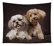 A Shihtzu And A Poodle On A Brown Tapestry