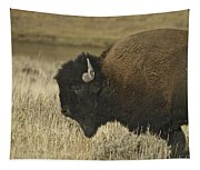 A Yellowstone Bison 9615 Tapestry