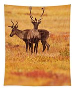 Adult Caribou In The Fall Colours Tapestry