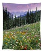 Alpine Wildflower Meadow, Mount Tapestry