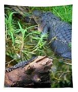 American Alligators Tapestry