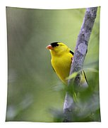 American Goldfinch - Peaceful Tapestry