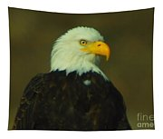 An Eagle Close Up  Tapestry