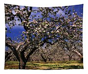 Apple Trees In An Orchard, County Tapestry