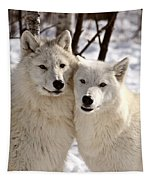 Arctic Wolves Close Together In Winter Tapestry