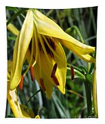 Asiatic Lily Named Black-eyed Cindy Tapestry