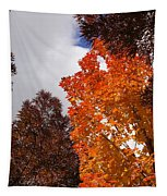 Autumn Looking Up Tapestry