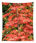 Autumnal Acer Tapestry