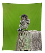 Baby Bluebird On Post Tapestry