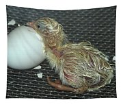 Baby Chick Resting  Tapestry