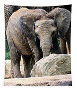 Baby Elephant Tapestry