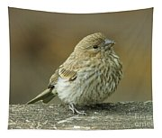 Baby House Finch Tapestry