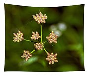 Baby Queen Anne's Lace Tapestry