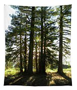 Back Lit Trees Tapestry