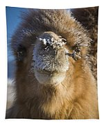 Bactrian Camel Camelus Bactrianus Tapestry