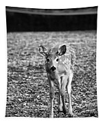 Bambi In Black And White Tapestry