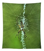 Banana Spider With Web Tapestry