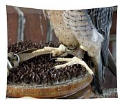 Barbary Falcon Feet Tapestry