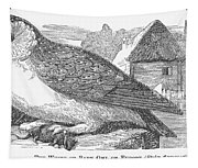 Barn Owl, 1877 Tapestry