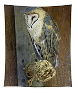 Barn Owl At Roost Tapestry
