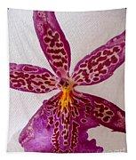 Beallara Marfitch - Howard's Dream - Orchid Tapestry