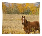 Beautiful Grazing Horse Tapestry