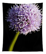 Beautiful Purple Flower With Black Background Tapestry