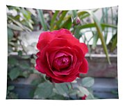 Beautiful Red Rose In A Small Garden Tapestry