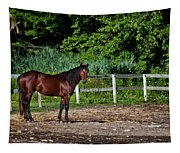 Beauty Of A Horse Tapestry
