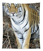 Bengal Tiger In Pench National Park Tapestry