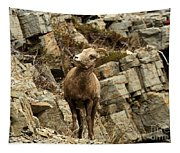 Big Horn On The Rocks Tapestry