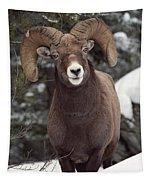 Bighorn Sheep, Maligne Canyon, Jasper Tapestry