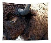 Bison Bison Up Close Tapestry