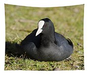 Black Duck Tapestry