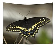 Black Swallowtail Din103 Tapestry
