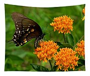 Black Swallowtail Visiting Butterfly Weed Din012 Tapestry