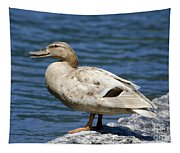 Blond Duck Tapestry
