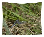 Blue Corporal Dragonfly Tapestry
