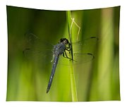 Blue Dragonfly 12 Tapestry