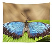 Blue Morpho Butterfly  Tapestry