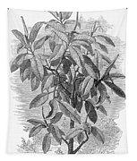 Botany: Ficus Elastica Tapestry