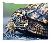 Box Turtle 1 Tapestry