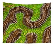 Brain Coral Tapestry