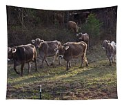 Brown Swiss Cows Coming Home Tapestry