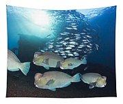 Bumphead Parrotfish Tapestry