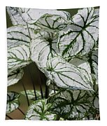 Caladium Named White Christmas Tapestry