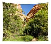 Calf Creek Falls Canyon Tapestry