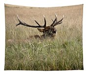 Call Of The Wild 1 Tapestry