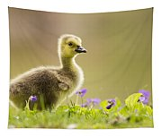 Canada Goose Baby Tapestry