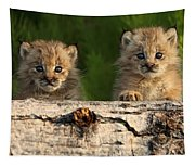 Canadian Lynx Kittens Looking Tapestry